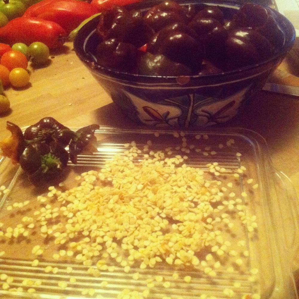 pepper-seeds