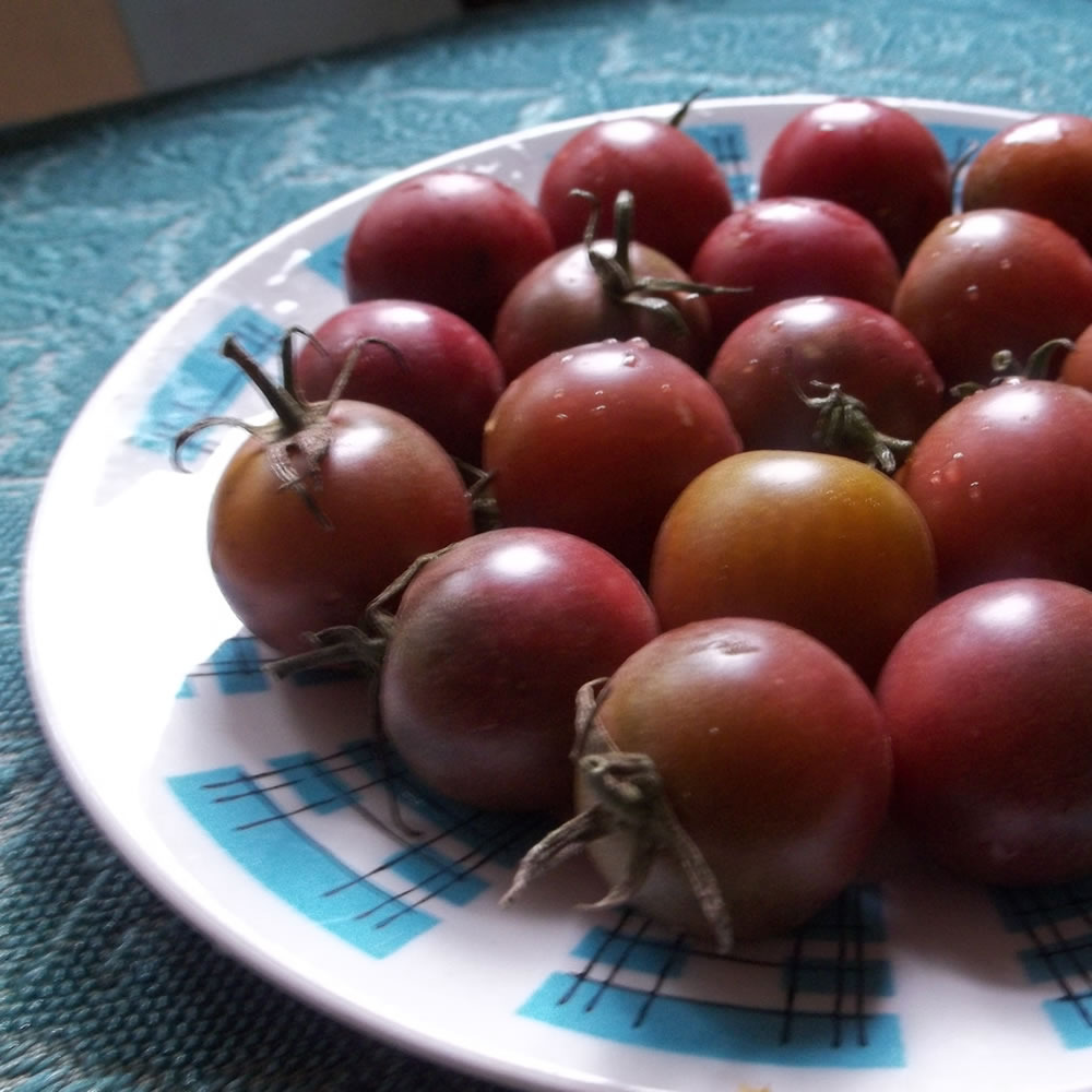 Black Cherry Heirloom Tomato