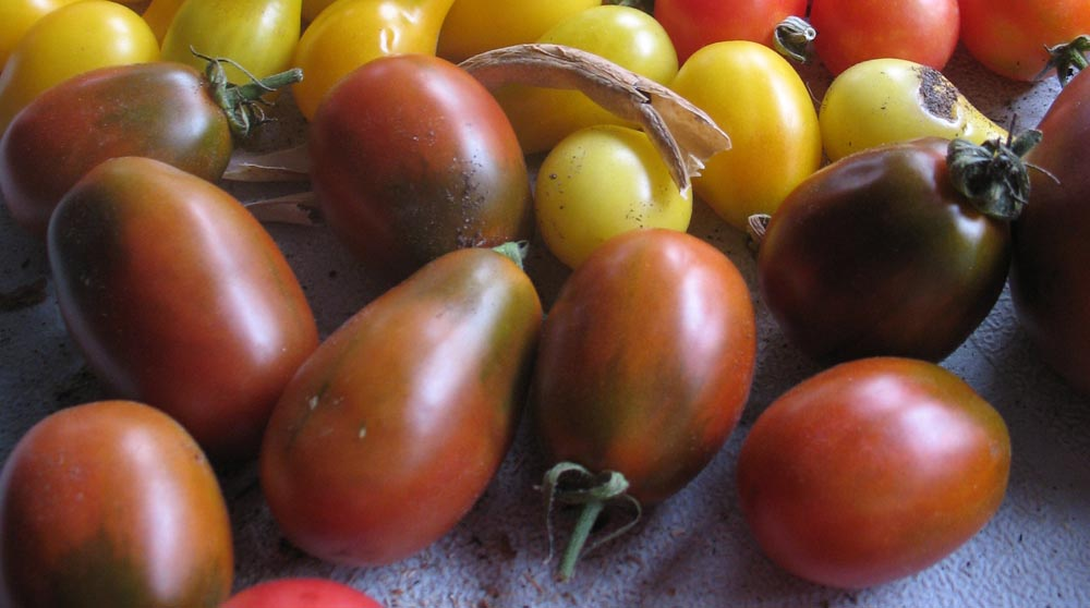 Black Plum Heirloom Tomato - urbantomato