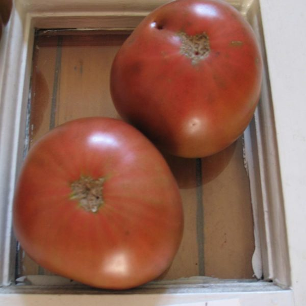 Black Seaman Tomatoes