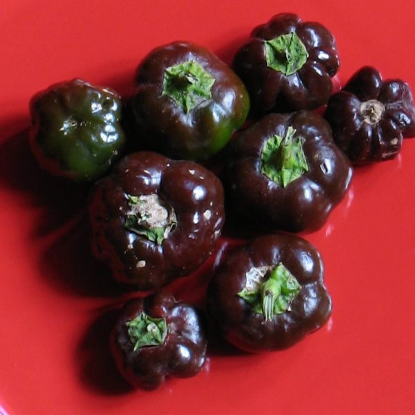 Chocolate Peppers