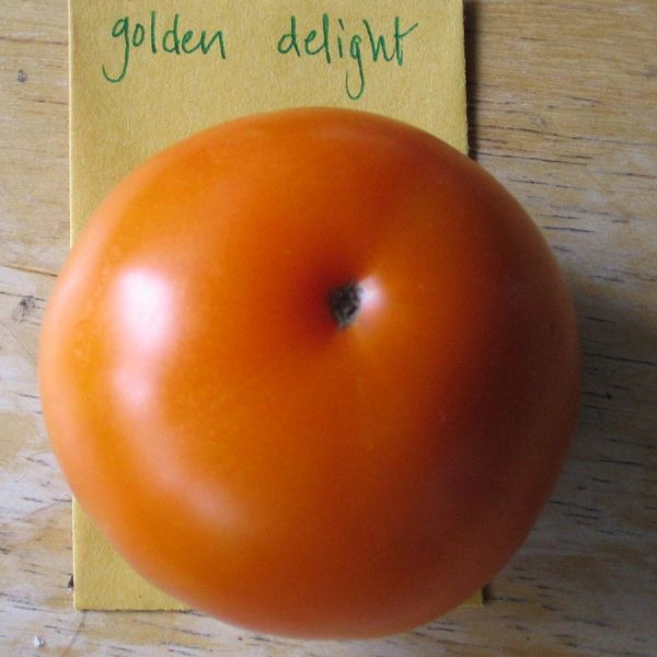 Golden Delight Tomato