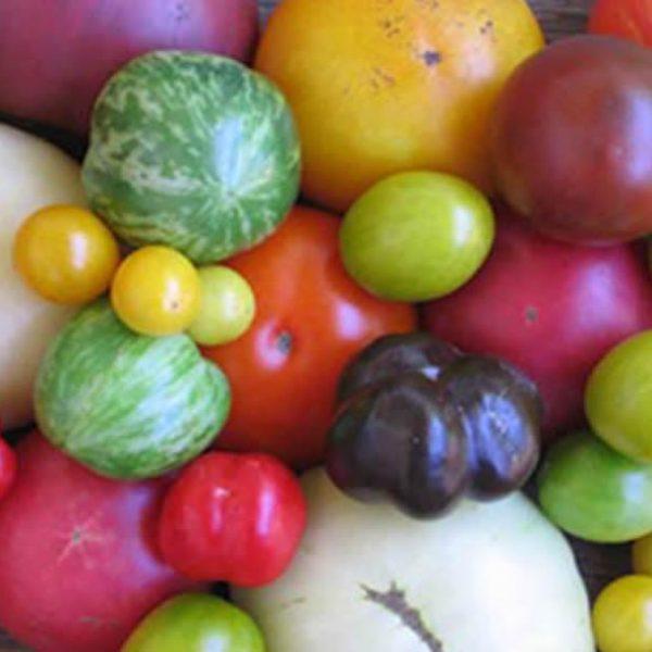 tomato-mixed-heirloom