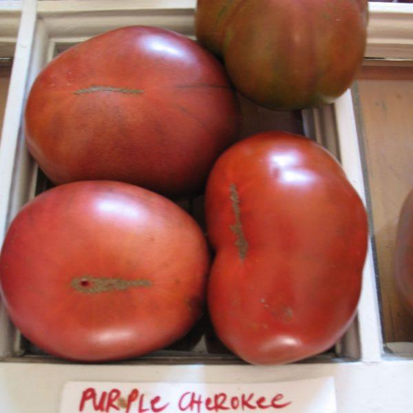 purple cherokee tomatoes