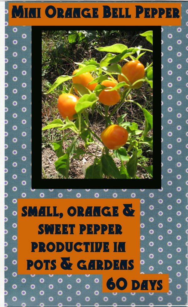 Mini Orange Bell Pepper Seed Packet