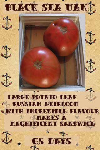 tomato-black-seaman