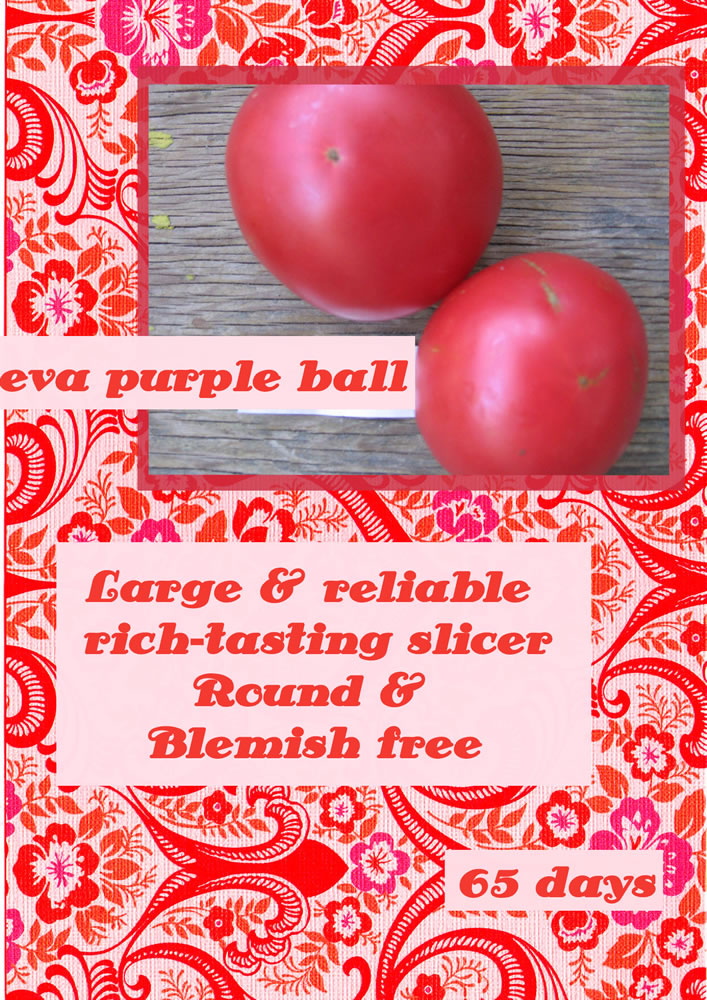 tomato-eva-purple-ball