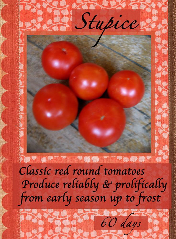 tomato-stupice