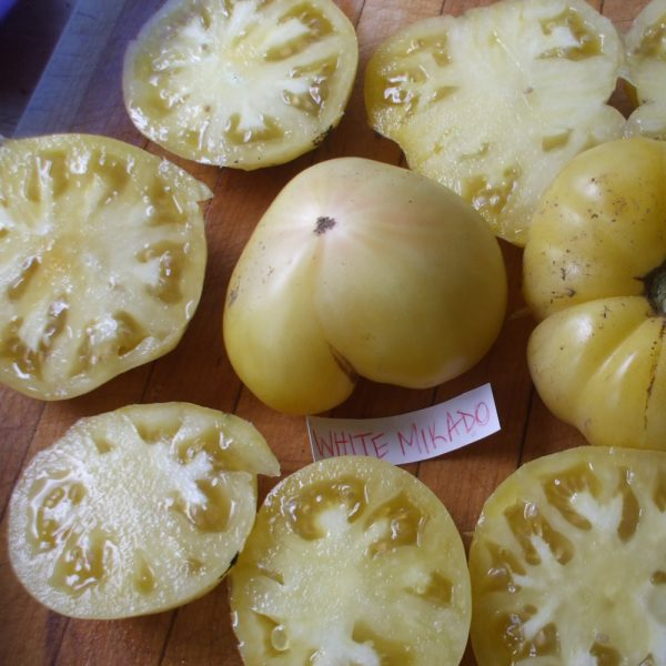 White Mikado Heirloom Tomato