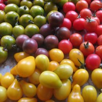 Mized Cherry Tomatoes