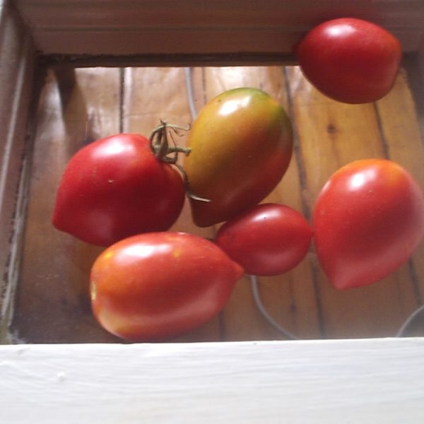 German Red Strawberry Heirloom Tomato