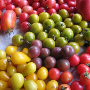 Mixed Cherry Heirloom Tomatoes
