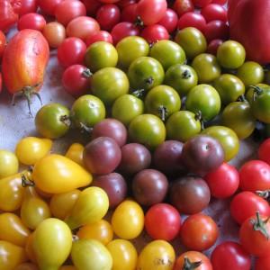 Mixed Cherry Heirloom Tomatoes