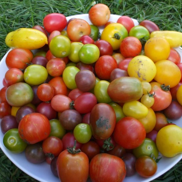 plate of cherry tomatoes