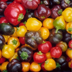 Mixed Sweet Heirloom Peppers