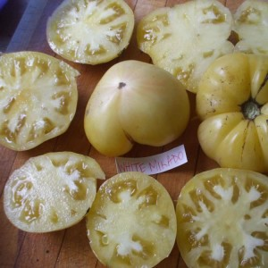 White Mikado Heirloom Tomato