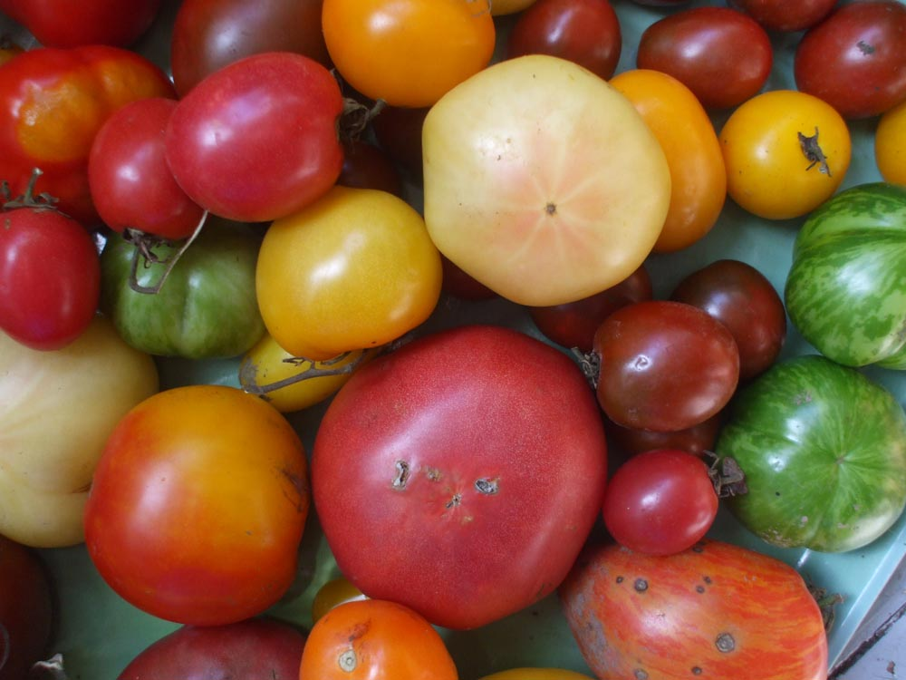 Mixed Heirlooms - Bright